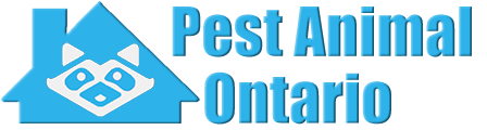 Ontario Wildlife and Animal Removal